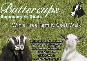 Buttercups Goat Sanctuary Competition