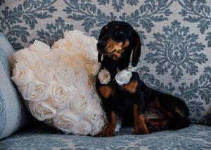 Furrytail Weddings