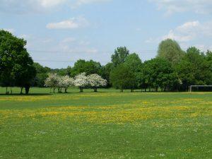 Wickford Memorial Park community safety