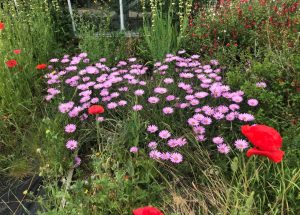 Garden Open Day