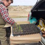 Tobias Jackson marginal ditch plant plugs Brooker Farm